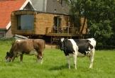 Gast op stal in wyns locatie met meerwaarde in friesland_3 1