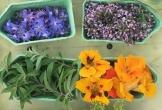 Malden kiemkracht duurzaam mvo natuur eten van het land3