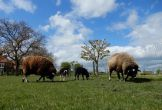 Buitenhof gelderse waarden locatie met meerwaarde boerderij zorg mens