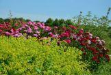 Rijswijk fruitproeverij natuur biologisch bloemen