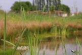 Malden kiemkracht duurzaam mvo natuur eventlocatie met natuur2