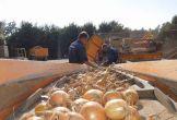 Buitenhof gelderse waarden locatie met meerwaarde boerderij zorg mens boerdenbedrijf