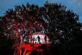 Camping de lievelinge in vuren ook voor zakelijke bijeenkomsten met meerwaarde de dome in de boom