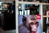 Den haag cafe utopie cafe voor idealen tegen dierproeven