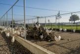 Venray kipster duurzame locatie mvo diervriendelijk3