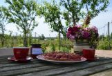 Rijswijk fruitproeverij natuur biologisch zelfgemaakt
