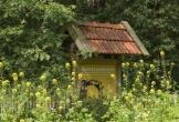 Dwingelderheem dwingelo natuur mvo oorsprong biologisch tuin