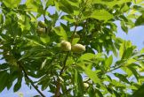 Rijswijk fruitproeverij natuur biologisch boomgaard