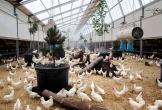 Venray kipster duurzame locatie mvo diervriendelijk7