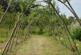 Rijswijk fruitproeverij natuur biologisch landgoed
