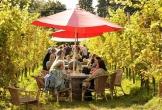 Nederlands wijnbouwcentrum groesbeek mvo mensen afstand arbeidsmarkt dineren in de wijngaard