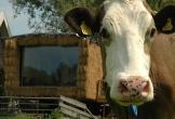 Gast op stal in wyns locatie met meerwaarde in friesland_12 1
